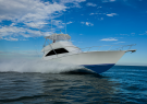 Seaduction Sportfishing Charter
